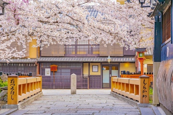 Kyoto's Cherry Blossoms 2021 - 15 Recommended Spots And Viewing Tips