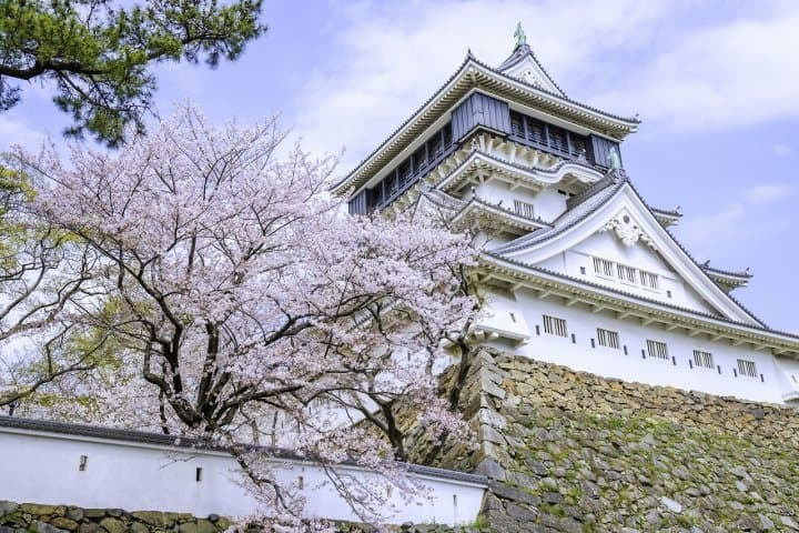 10 Great Kyushu Cherry Blossom Spots to Visit in 2021