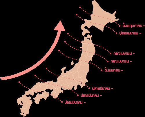 รวมข้อมูลชมดอกซากุระบานที่ญี่ปุ่น ปี 2019